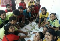 Environment Week Celebration